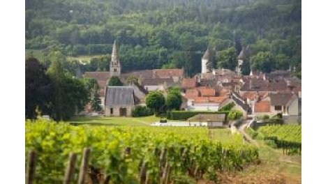 """Terrain constructible du mois """"Le Saint Cassien"""" - Savigny-Lès-Beaune"""